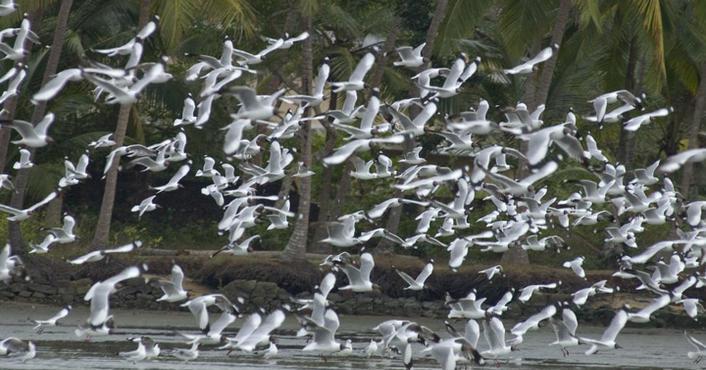 kadalundi_bird_sanctuary20131031104742_6_1