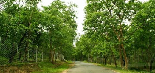 17  Marayoor_forest!