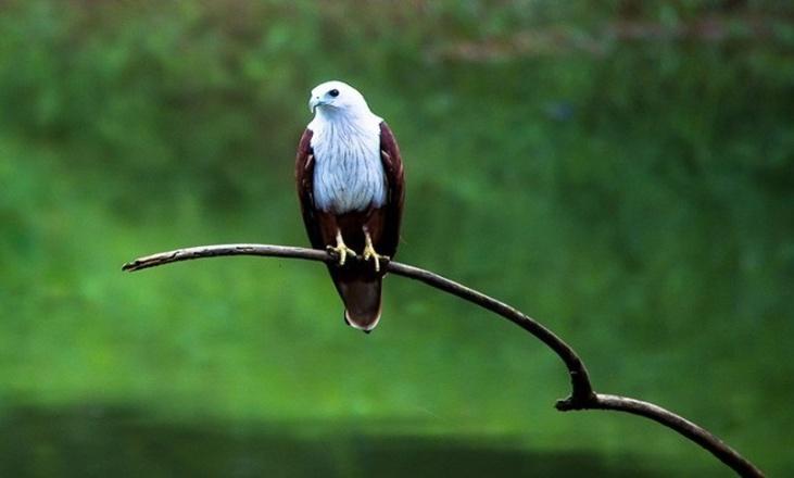 thattekad-bird-sanctuary