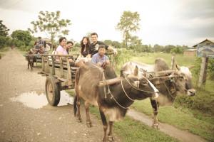 2-Bullock-Cart-Rides