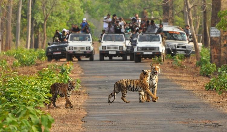 Image result for bannerghatta national park bangalore